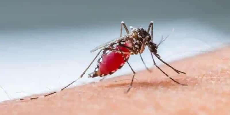 penyebab malaria