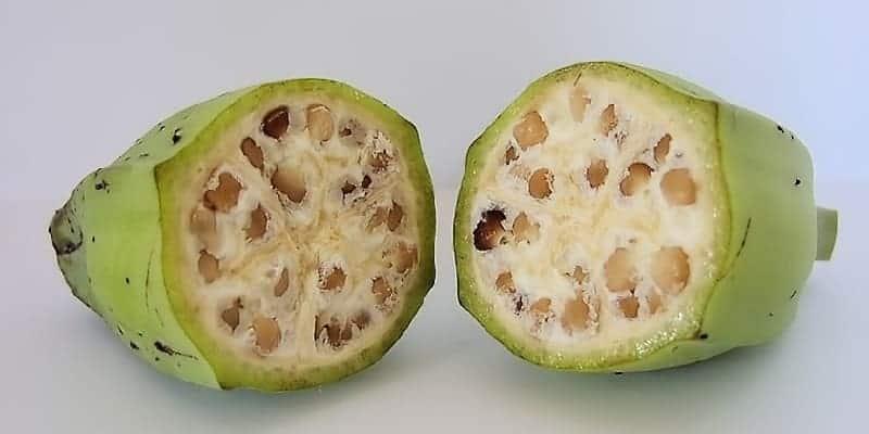 pisang klutuk atau pisang batu untuk resep herbal maag