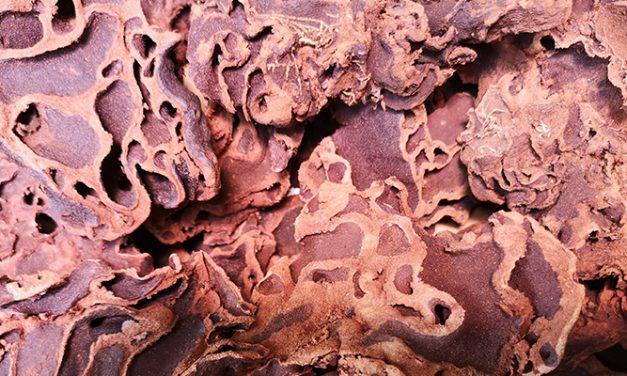 Kandungan Sarang Semut
