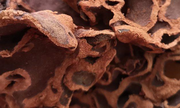 Tanya Jawab Sarang Semut