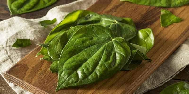 daun sirih untuk ramuan herbal bisul