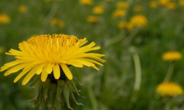 Resep Herbal Pembengkakan Kaki, Cara Alami Ciutkan Kaki yang Membengkak