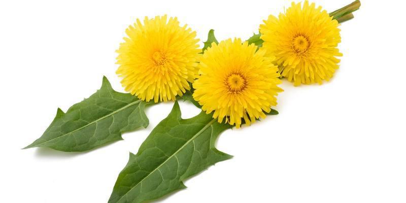 jombang untuk resep herbal bisul