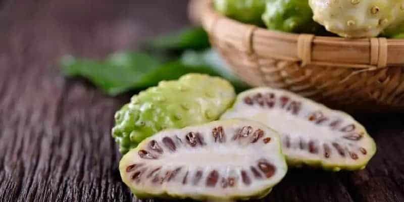 mengkudu untuk ramuan herbal meningkatkan nafsu makan