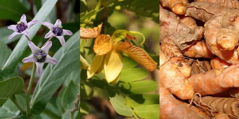 bahan-bahan untuk resep herbal campak