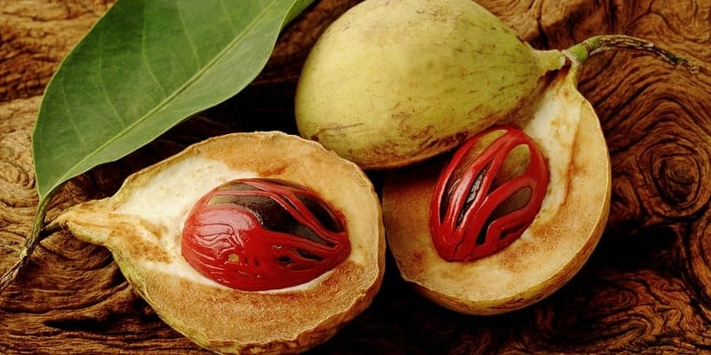 buah pala untuk resep herbal diare