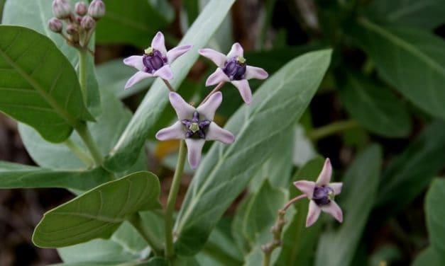 Resep Herbal Campak untuk Kurangi Gejala-Gejala yang Menjengkelkan