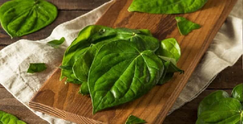 daun sirih untuk ramuan herbal mimisan