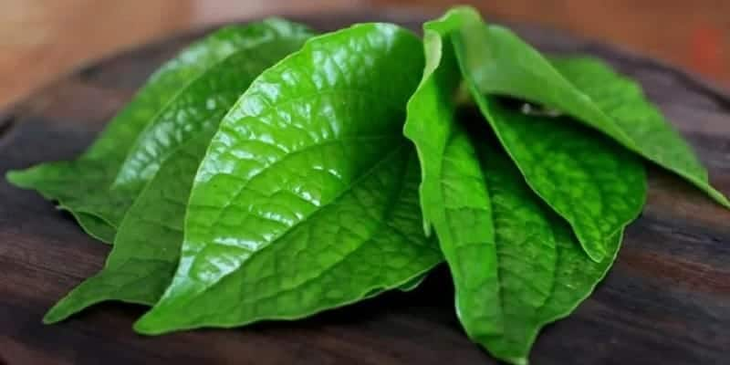 resep herbal mimisan