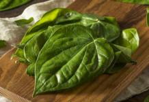 daun sirih untuk resep herbal luka bakar