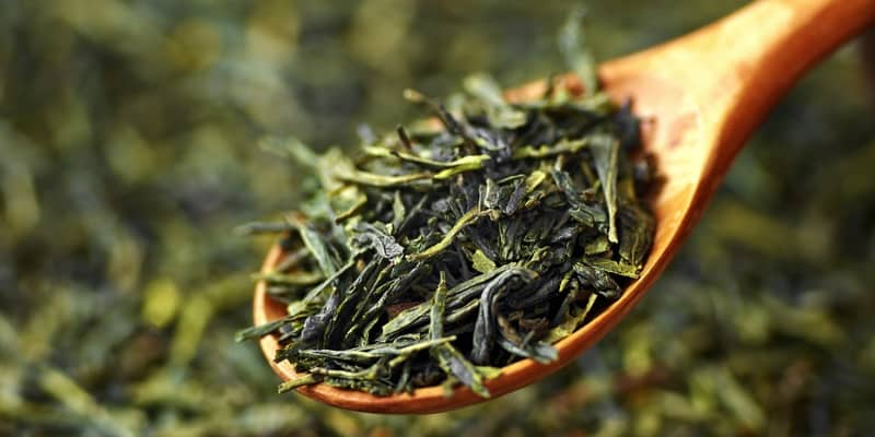 daun teh hijau untuk resep herbal infeksi saluran pencernaan