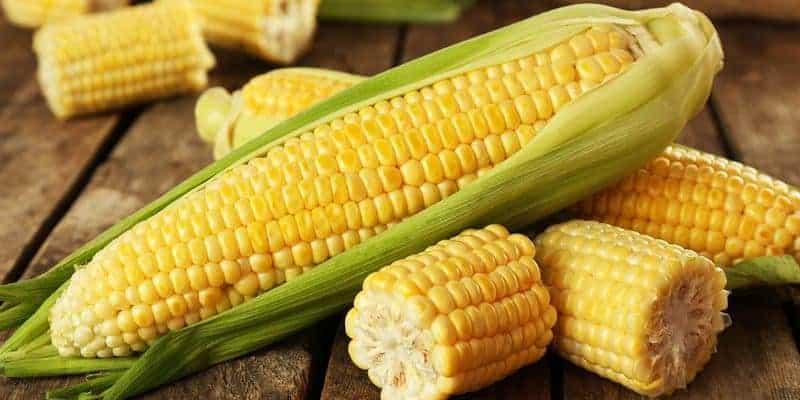 jagung manis untuk ramuan herbal anemia