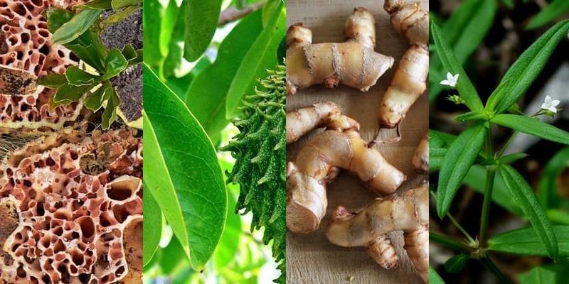 tumbuhan herbal untuk kanker