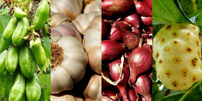 tumbuhan herbal untuk kolesterol