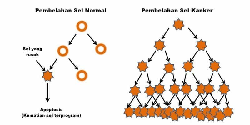 pembelahan sel normal dan sel abnormal