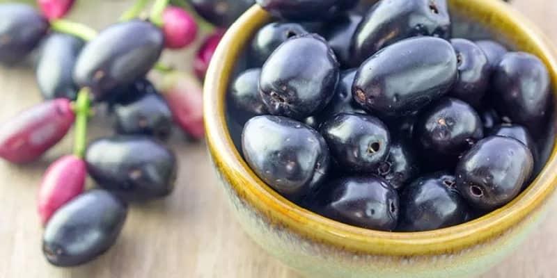 buah jamblang untuk ramuan herbal asma