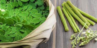 manfaat daun kelor untuk kanker, cara mengolah daun kelor untuk kanker, daun kelor untuk obat kanker