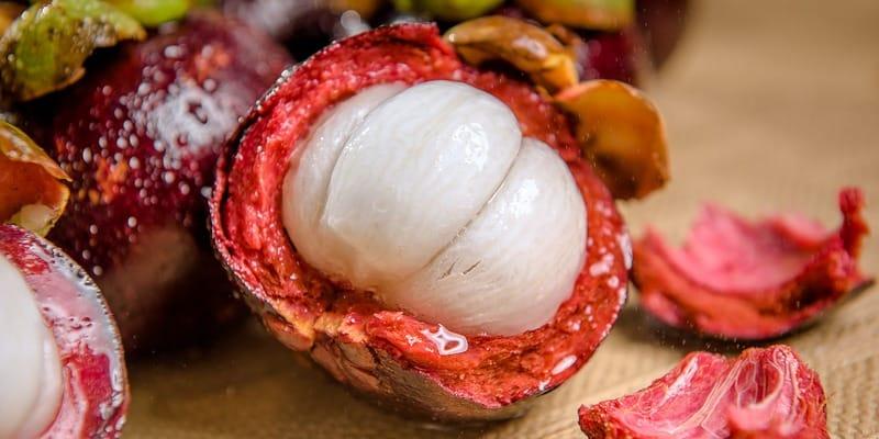 buah manggis untuk kanker payudara