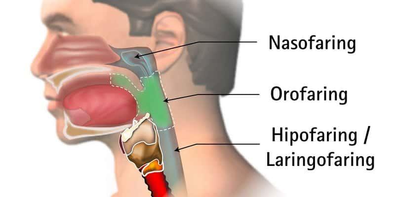 Gambar Anatomi Faring