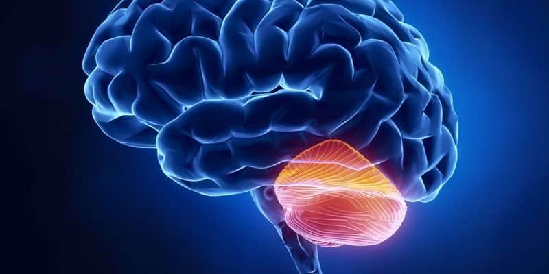 Otak Kecil atau Cerebellum
