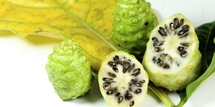 Herbal Noni juice untuk obat pengapuran tulang yang alami & tradisional