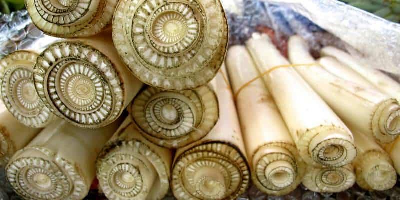 pelepah pisang untuk ramuan herbal radang ginjal