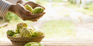 Herbal Noni untuk Obat Insomnia Alami yang Aman & Efektif