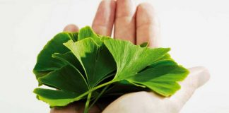 Manfaat Ginkgo Biloba untuk Kesehatan