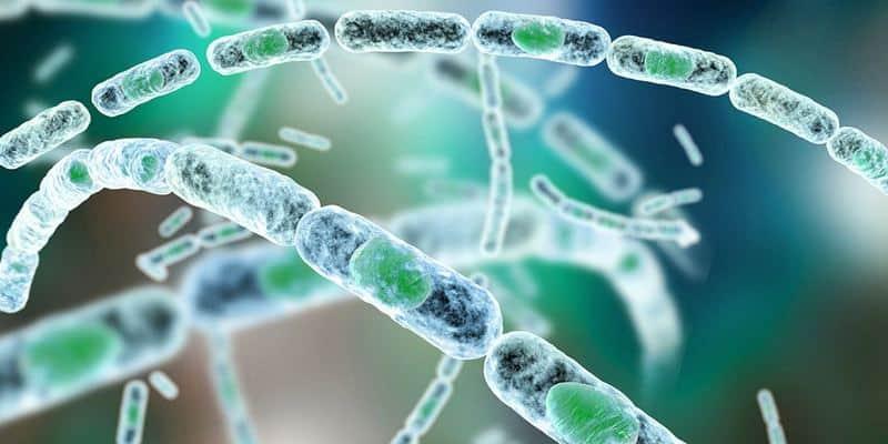 Ilustrasi Bakteri Penyebab Antraks