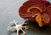 Ilustrasi Penyakit Kanker Otak Glioblastoma