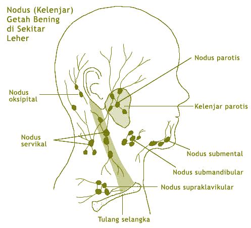 Ilustrasi Kelenjar Getah Bening di Sekitar Leher